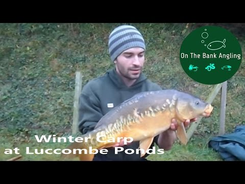 Winter Carp Fishing - Luccombe Ponds