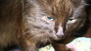 Самый красивый кот. Черный кот с зелеными глазами.