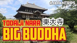 BERKUNJUNG KE KUIL Todaiji Nara Big Buddha - TRAVELING ke JEPANG
