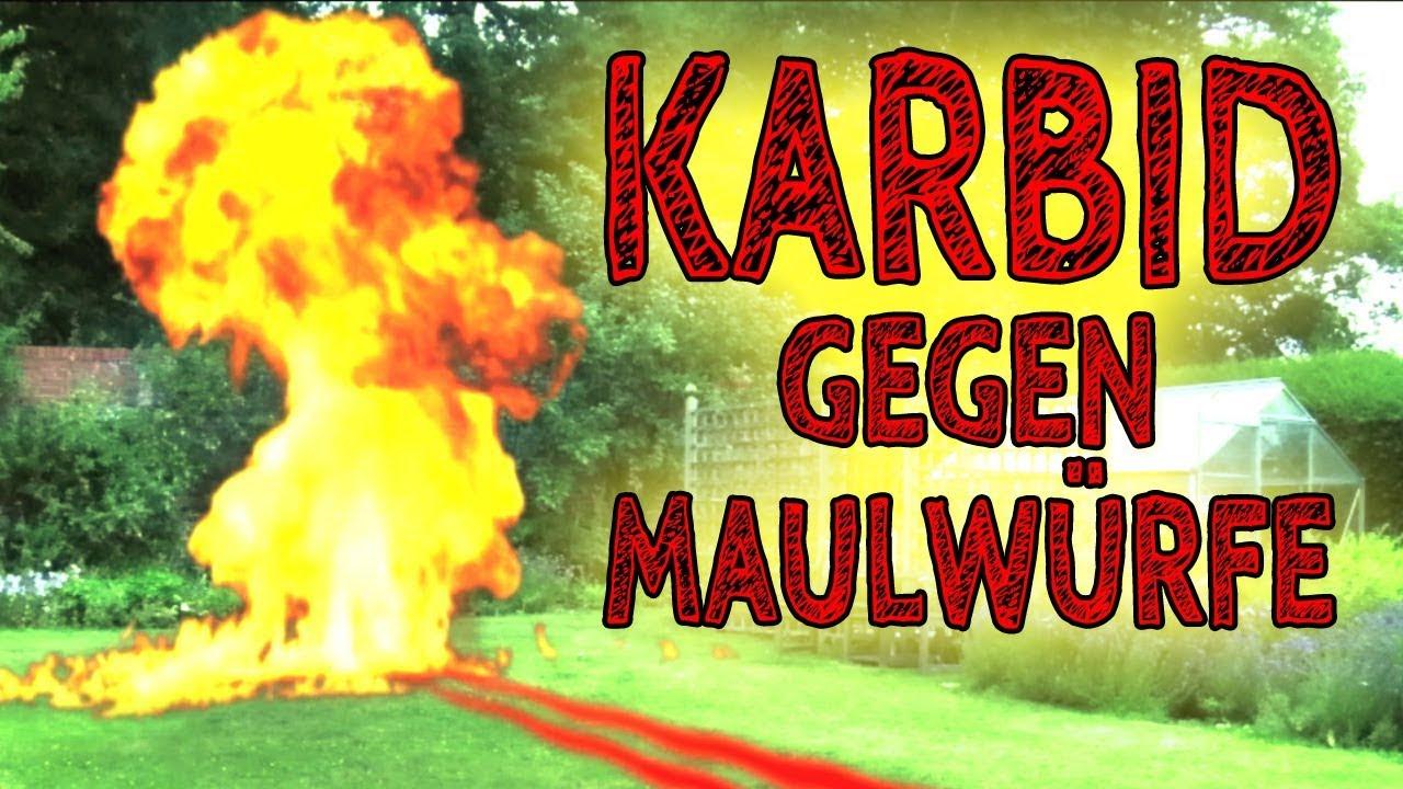 Karbid Die Beste Alternative Zu Karbid Um Maulwürfewühlmäuse