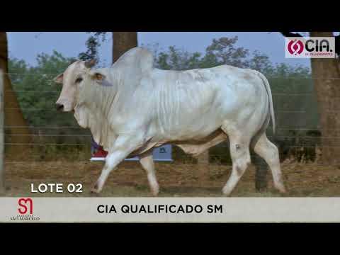 LOTE 02  - 5o Leilão - CIA de Melhoramento 2019 - Faz. São Marcelo