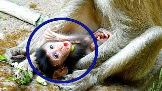 Newest Update, God!! New Baby Of Duchese Opening Big Mouth For Mum Putting  Fruit, So Hungry