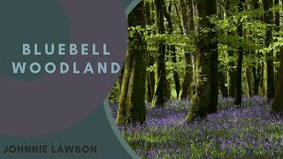 8 Hour Nature Sound Relaxation-Soothing Forest Birds Singing-Relaxing Sleep Sounds-Without Music thumbnail