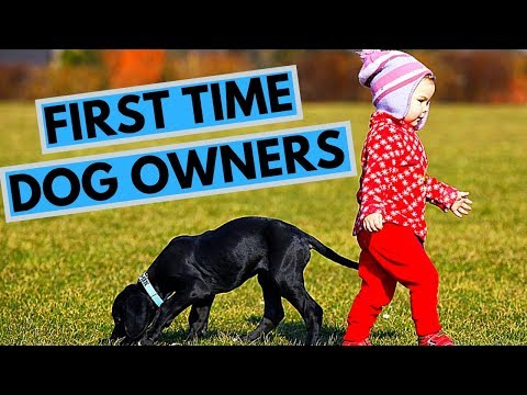 9 Tips for First Time Dog Owners