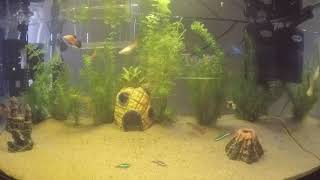 Johnny Rock - Mr.  Happy Tropical Fish Timelapse