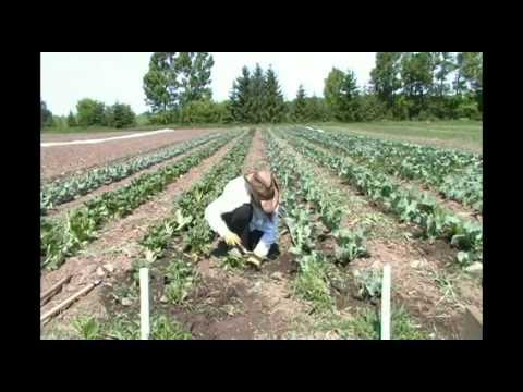 Reroot Organic CSA