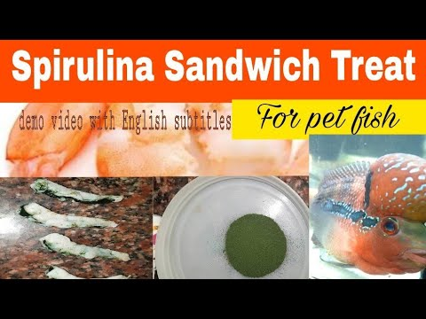 How To Give Spirulina To Fishes In Food?