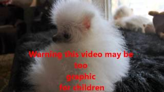 My Movie Of Wiggles Monkey Uglies