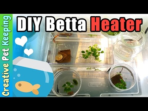 How To Heat Up Multiple Betta Cups And Bowls With ONE Heater | DIY