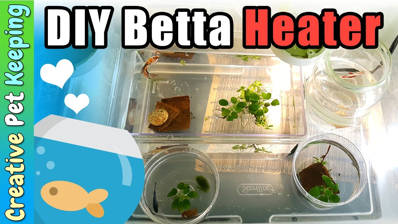 Heater For Betta Fish Facias