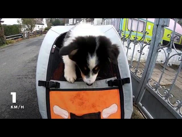 Buddy im Fahrradanhänger 🙈