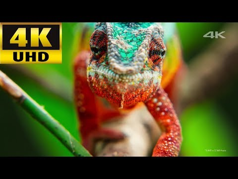 Sony 4K TV Demo Video Relax Music. Forest Animals World Heritage Ocean Life Baby Soccer Bellagio...