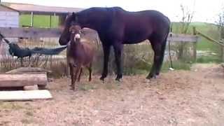 Carolina furiosa- asino contro cavallo