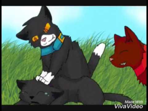 Игры коты воители кот бич