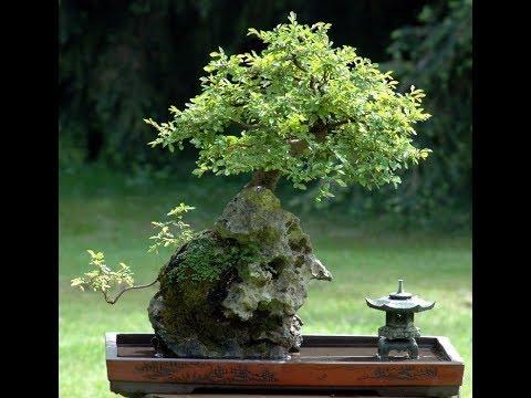 Bonsai art shipping