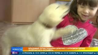 Путин подарил девочке с аутизмом прелестного щенка золотистого ретривера