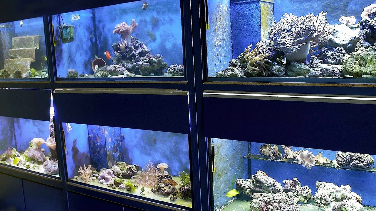 Fish tank electricity cost - How To Pick A Fish Tank