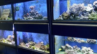 How To Pick A Fish Tank | Aquarium Care