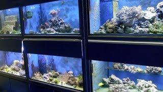 How To Pick A Fish Tank | Aquarium Care