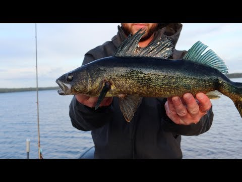 North Ontario Walleye DOG LAKE - Wassiagomin Lodge, Missanabie Ontario