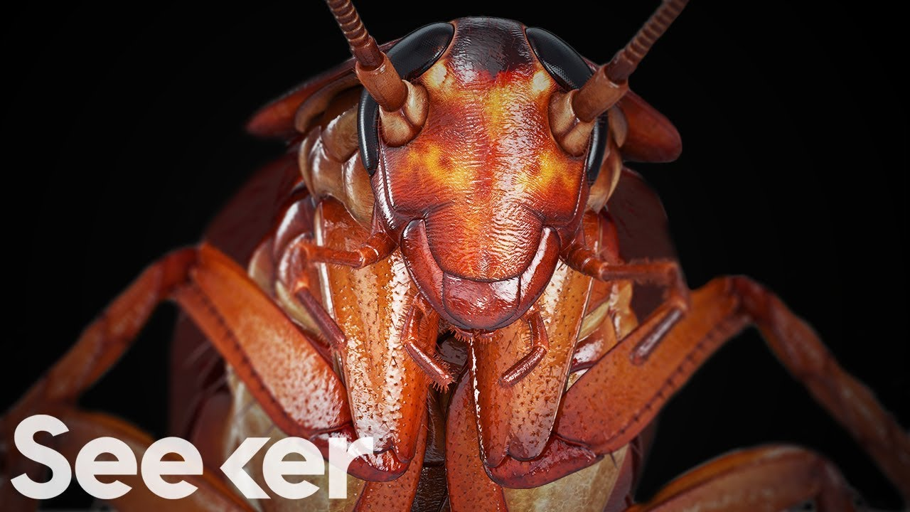 Cockroaches Are Indestructible, And the Secret Is in Their Genome