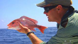 Destination Panhandle - RED SNAPPER fishing in Florida