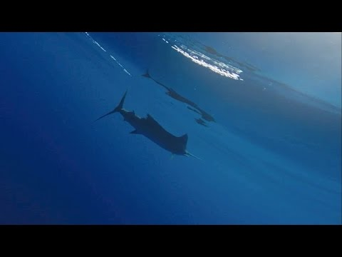 IGFA 2015 Offshore World Championship