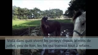 sauvetage poney 1/02/2014