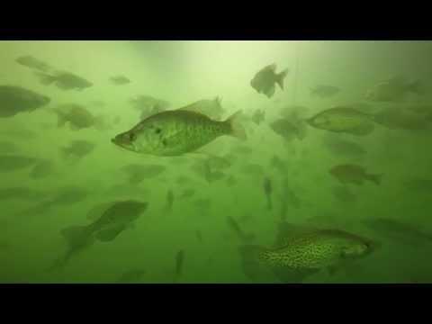 Underwater in Kansas: An Angler
