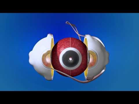 Видеоурок строение глаза