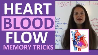Blood Flow Through the Heart | Easy Way to Memorize Blood Flow for Anatomy & Pathophysiology