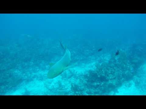 Hol Chan Marine Park Ambergris Caye - Belize July 2017