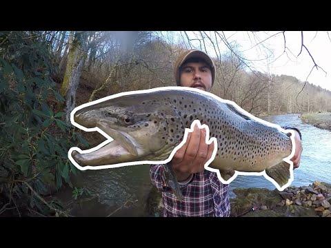 Huge Brown Trout!! Lansing NC