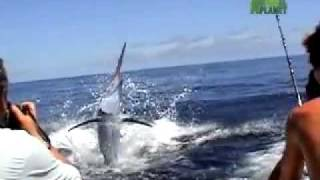 Untamed and Uncut: Marlin Impales Boy