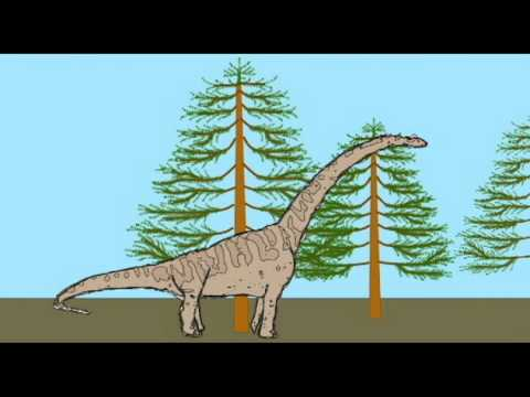 PL2: SAUROPODS: Brachiosaurus