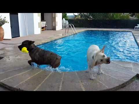 Buddy swimming