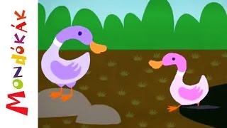 Kis kacsa fürdik (Gyerekdalok és mondókák, rajzfilm gyerekeknek)