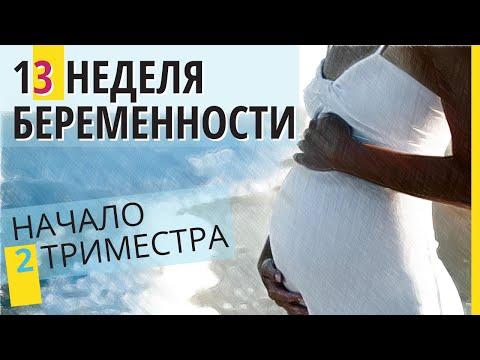13 неделя беременности. Развитие плода. Как выглядит ребенок на 13 неделе