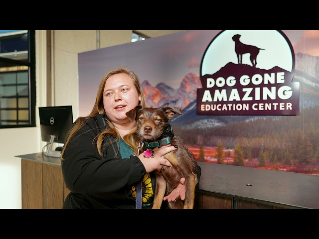 Dog Gone Amazing - Dog Training Testimonial for Penny