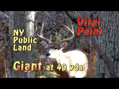 NY Public Land Giant Buck At 40 Yards
