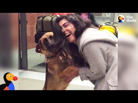 Dogs Reunited With Owners in 2017 | The Dodo