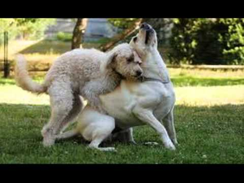 Dogs Humping Each Other And Something Random