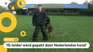 Zo worden honden getraind om terroristen te pakken