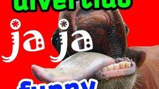 Funny animal videos, divertidos graciosos de animales, eats Brick, come ladrillo Clips Humor