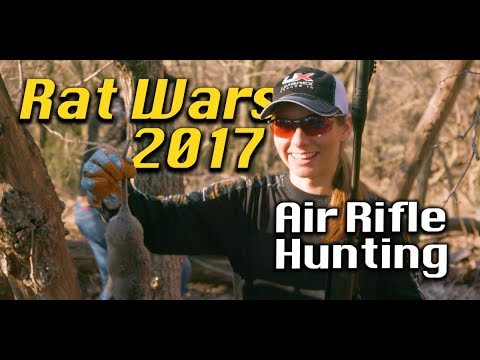 Air Rifle Hunting : Rat Wars and Pest Control with Air Guns