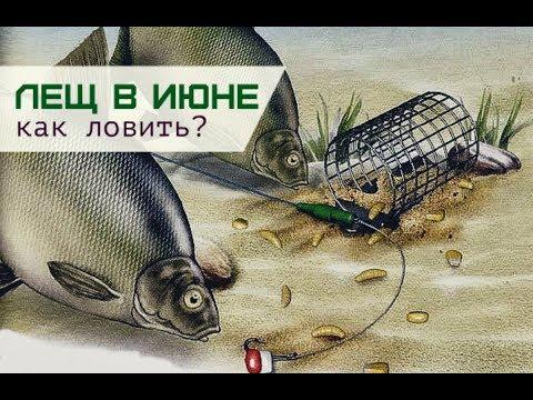 рыбалка на щуку в июне на спиннинг