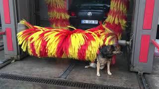 Собака моется на автомойке!!! Измир! Турция!