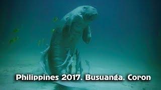 видео Все о дайвинге на Филиппинах