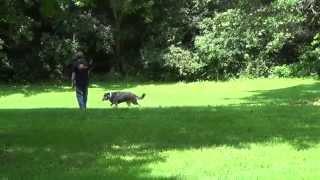 World Class Dog Kennels, Pet Resort, Milwaukee Wi.