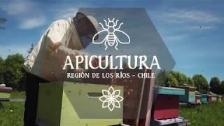 Apicultura  - Región de Los Ríos -